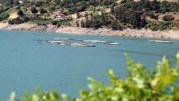 Torul barajında alabalık üretimi