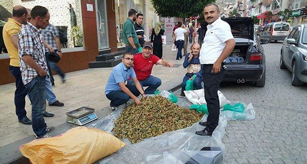 Kürtün fındığı pazarda