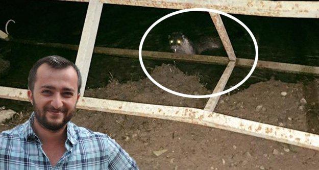 Kürtünde su samuru görüldü