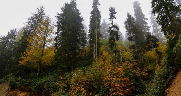 Örümcek Ormanlarında sonbahar güzelliği