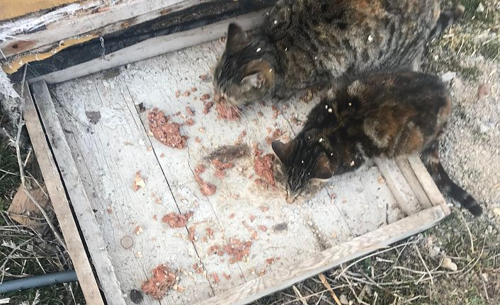 Oral'dan 4 Ekim Hayvanları Koruma Günü mesajı