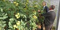 Tarımda küçük aile işletmelerine destek verilecek