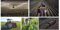 Gümüşhanede bin 956 Genç Çiftçi destek için müracaat etti
