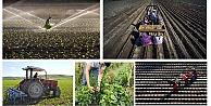 Genç Çiftçi müracaatları başladı