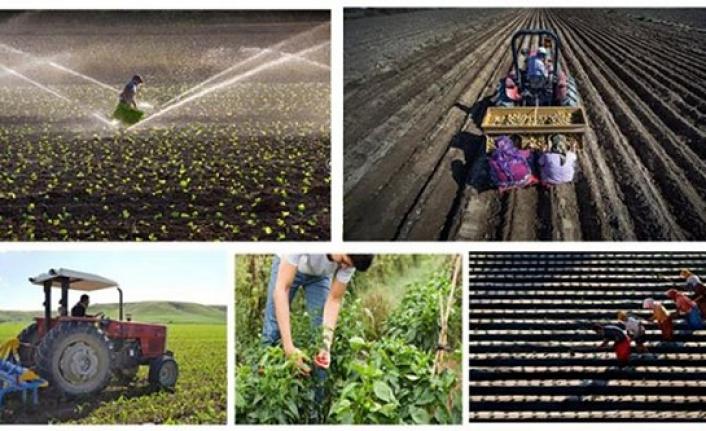 Genç Çiftçi Projesi Müracaatları Başladı