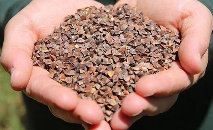 Gümüşhane'de Karabuğday hasadı başladı