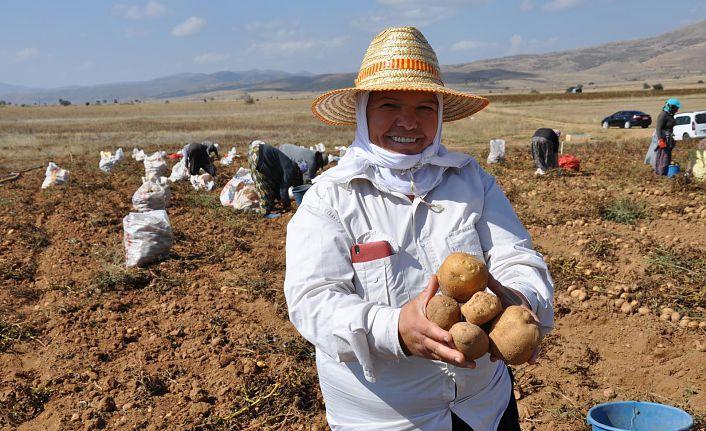 Gümüşhane'de patates rekoltesinin 45 bin ton olması bekleniyor