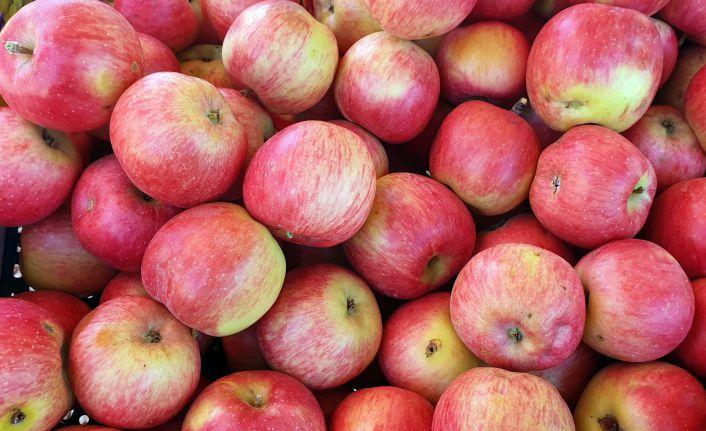 Gümüşhane elmaları hasat edilmeye başlandı