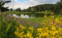 Tabiat harikası Altınpınar Limni gölü 'Tabiat Parkı' olmayı bekliyor