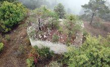 Tarihi kilisenin çatısında büyüyen ağaçlar kiliseyi tehdit ediyor