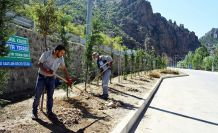 Torul'da peyzaj ve ağaçlandırma çalışmaları devam ediyor