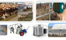 Büyükbaş ve küçükbaş hayvancılık işletmelerine yüzde 50 hibe desteği