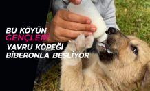 Köyün gençleri annesiz kalan yavru köpeği biberonla besliyor