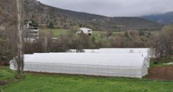 Çiftçilere 283 bin adet sebze fidesi dağıtıldı