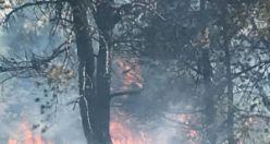 Torul'da orman yangını