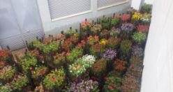 KYK Gümüşhane bahçelerine 17 bin çiçek