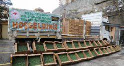 Gümüşhane'de çiftçilere 145 bin fide dağıtıldı