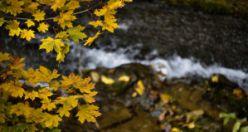 Gümüşhane'den sonbahar manzaraları