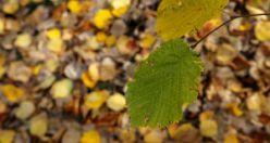 Günay köyünde sonbahar güzelliği
