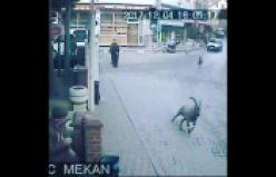Keçiler güvenlik kamerasına takıldı