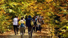 Canlı ağaç müzesi rengarenk