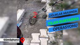 Gümüşhane kent merkezinde yılan operasyonu