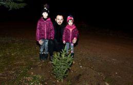 Yılbaşında kesilen ağaçlar için yılın son...