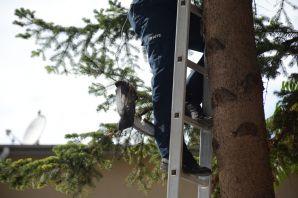 Gümüşhane'de güvercin kurtarma operasyonu