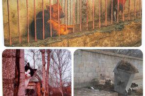 Hayvanseverler Kulübü Resim ve Fotoğraf yarışması düzenledi