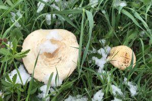 Gümüşhane'nin yüksek kesimlerine 23 Mayıs'ta kar sürprizi