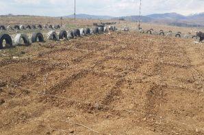 Çim'de kimyasal gübre yerine doğal bakteri