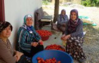 Torul'da kadınlara domates konserve yapımı eğitimi...