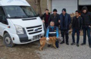 Torul Belediyesinden kafasına bidon sıkışan köpek...