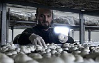 Olmaz denileni yaptı şimdi binlerce ton mantar üretiyor