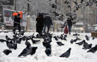 Gümüşhane'deki kar yağışı