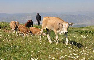 Tarım ve hayvancılıkta yüz güldüren rakamlar