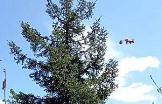 Gümüşhane'de uçan sincap kameralarda