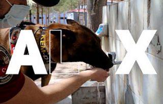 Narkotik ekiplerinin en büyük yardımcısı: Alex