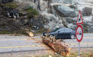 Zigana dağında dev ağaç karayoluna düştü