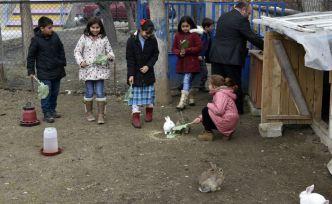 Köy okulunda mini hayvanat bahçesi kurdular
