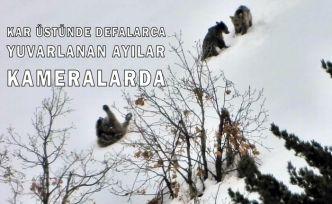 Gümüşhane'de ayıların kar keyfi kameralarda
