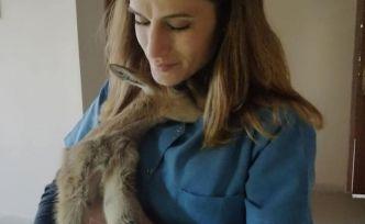 Ayağı kırılan yavru yaban keçisi 450 kilometre uzaklıktaki merkezde tedavi altına alındı