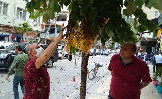 Oğul veren arılar cadde ortasındaki ağaca konunca paniğe neden oldu