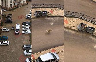 Aç kalan sokak hayvanları saldırmaya başladı