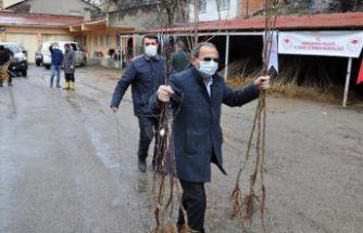 Gümüşhane'de 65 yaş üzeri çiftçilerin fidanları evlerine götürüldü