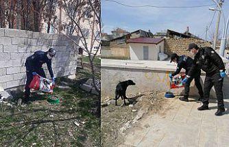 Kelkit'te sokak hayvanlarına yiyecek ve su bırakılıyor