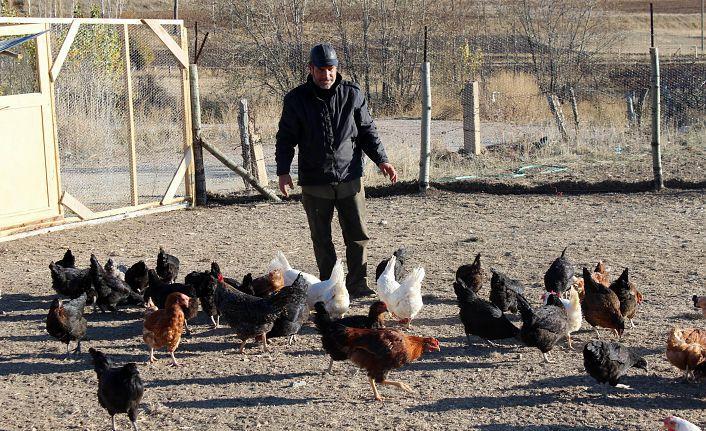 Emekli oldu, 'boş durmak bana göre değil' diyip tavuk çiftliği kurdu
