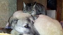 Kedi ile köpeklerin anlamlı dostluğu