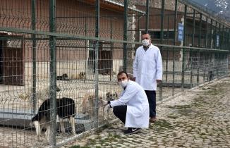 Gümüşhane Belediyesi sokak hayvanlarını unutmadı