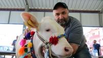 Kelkit'te 10.Organik Tarım ve Hayvancılık Festivali yapıldı
